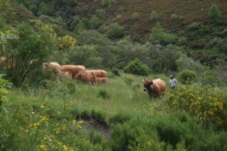 La Plataforma por la Ganadería Extensiva y el Pastoralismo entrega sus propuestas para la PAC