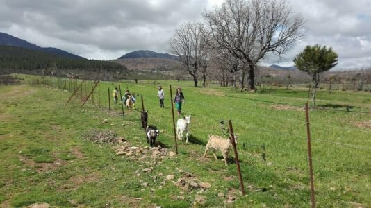 ¿Cómo se lo montan los nuevos proyectos de ganadería extensiva?