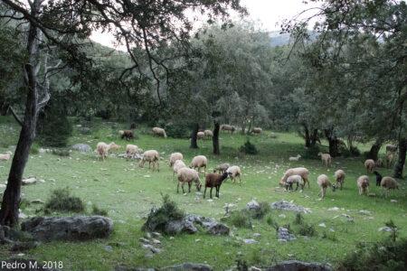 Contestando a los medios: la ganadería extensiva es una actividad clave para el ser humano