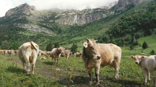2050: El año en que la ganadería extensiva regresó