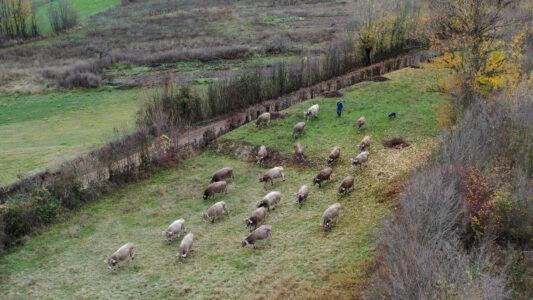 Documentos para defender la ganadería extensiva ante la nueva PAC