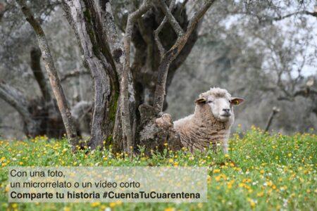 #CuentaTuCuarentena