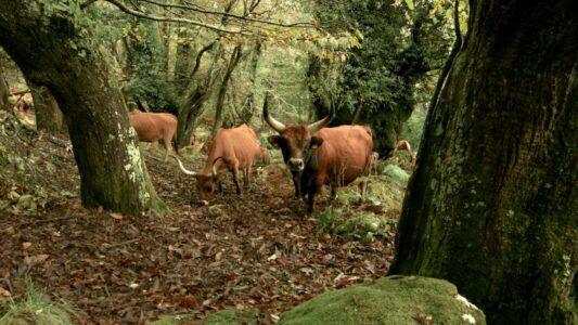 «Bajo los bosques» la belleza del vínculo que une árboles, personas y animales