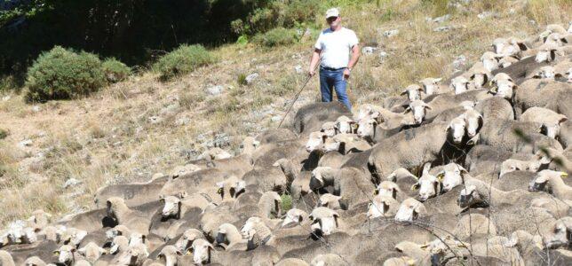Apoyamos que 2026 sea el año internacional de los pastos y el pastoreo