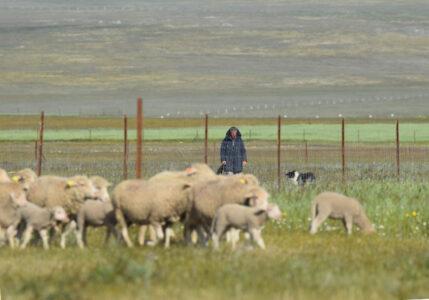El Comité de Agricultura de la FAO apoya el año internacional de los pastos y pastores